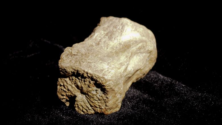 See More Fossil Replicas